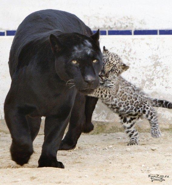 с пантера фото детей черная